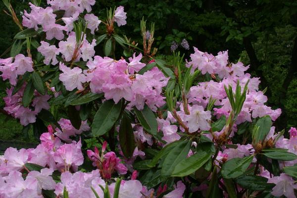 Помилуймося красою квітів!