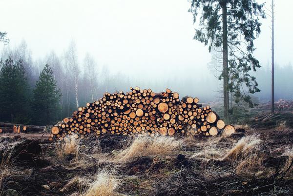 """Результат пошуку зображень за запитом """"На Прикарпатті рубають ліс масштаби вражають"""""""